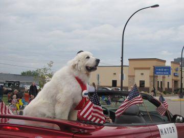 Duke en un desfile en Cormorant Township
