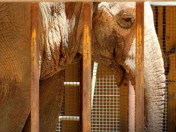 La elefanta Flavia