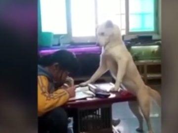 Un perro se posa sobre una mesa frente a una niña haciendo los deberes