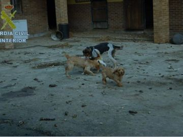 Imagen algunos de los perros rescatados
