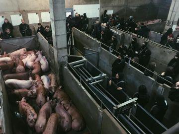 Imagen de los activistas en el matadero.