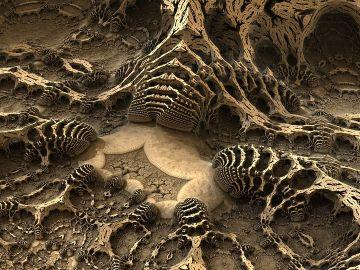 Imagen de archivo de unos fósiles