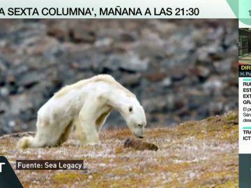 Las desgarradoras imágenes del cambio climático: ¿y si nuestros hijos sufrieran sus consecuencias irreversibles?