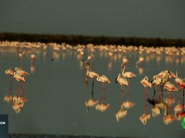 El arte (y la técnica) de fotografiar a las especies en el parque de Doñana
