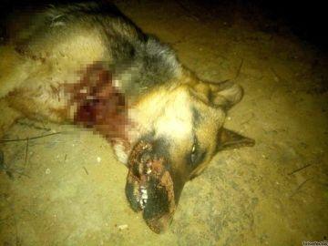 Imagen de la perra asesinada a tiros en Jaén