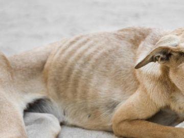 Imagen de archivo de un perro maltratado