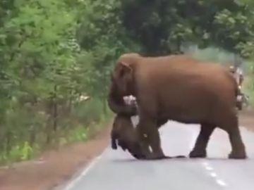 Imagen de un elefante llevando una cría muerta