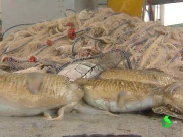 La pesca de trasmallo, un 'arte' respetuoso y artesanal en extinción