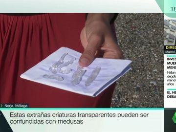 Invaden las playas andaluzas, pero no son medusas: esta es la beneficiosa función de las salpas