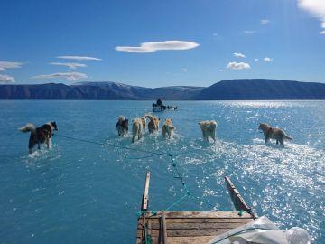 Perros arrastrando por el agua un trineo en Groenlandia