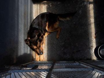 Un perro abandonado espera en su cubil (Archivo)