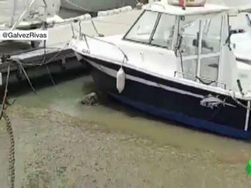 Barcos del puerto de Conil después de una bajada del nivel del mar