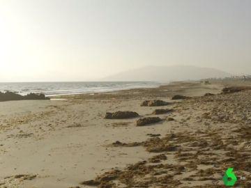 Playa de Tarifa con algas invasoras