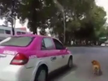 Imagen del perro que corrió tras sus dueños tras ser abandonado