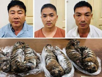 Encuentran siete tigres muertos en un coche en Vietnam