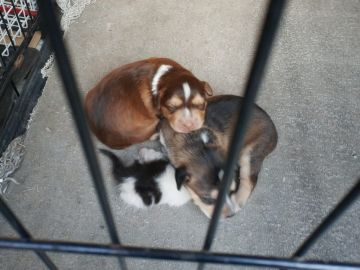 Cachorros en el Centro de Protección Animal de Getafe