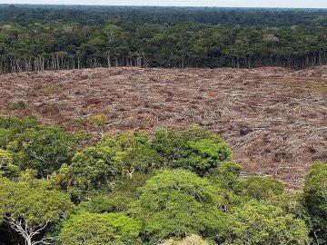 Foto de archivo del 28 de noviembre de 2013, de árboles talados en la selva amazónica (Brasil)