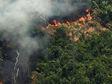 Vista aérea de varias columnas de humo en la selva amazónica de Porto Velho, Rondonia