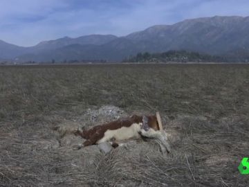 Chile atraviesa su peor sequía en décadas y el Gobierno declara la emergencia agrícola