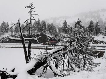 Primer temporal nieve en Navarra
