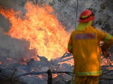 Los incendios de Australia arrasan con casi la totalidad de especies de Isla Canguro