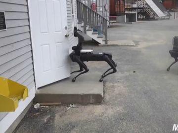 Perros robots, la nueva apuesta de la Policía que ya patrulla por Massachussets