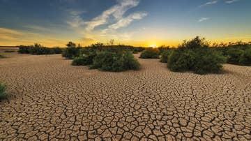 El Parlamento Europeo declara la emergencia climatica global