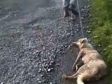 Un cazador arrastra a su perra moribunda