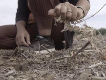 Enviado Especial comprueba las consecuencias negativas del cultivo de soja para el suelo