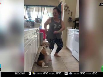 perro regaeton