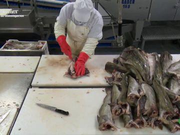 Imagen de una empresa que congela pescado
