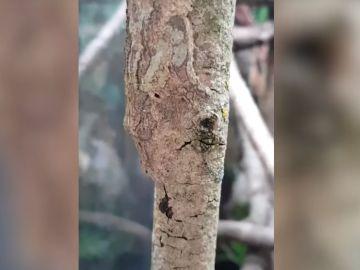 Un gecko camuflado sobre el tronco de un árbol.