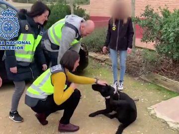 Primeras imágenes de la perra Pocahontas tras ser rescatada por la Policía de la casa del entrenador