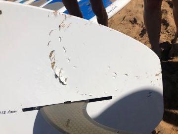 Un tiburón tigre sorprende a un surfista y muerde su tabla
