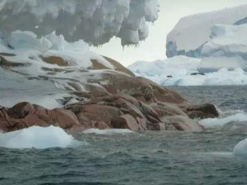 Imagen de la isla que ha aparecido en la Antártida por el deshielo glaciar