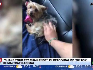 'Shake your pet challenge': el nuevo reto viral de Tik Tok que enciende las alarmas del maltrato animal