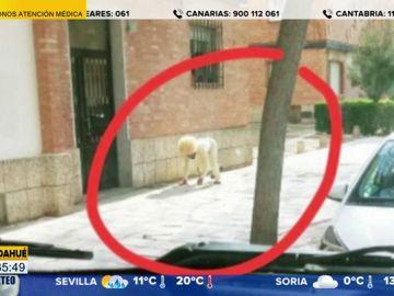 Un hombre se disfraza de perro para salir a la calle y saltarse el confinamiento por coronavirus