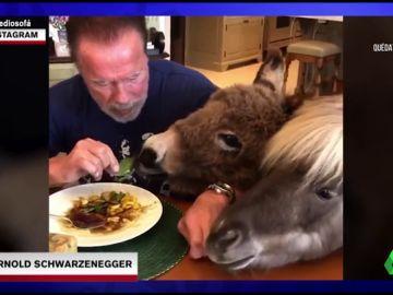 Comiendo junto a un burro y un poni: así están pasando la cuarentena Arnold Schwarzenegger y otros famosos