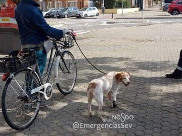 La mujer llevaba a su perro, con una prótesis, atado al manillar de su bici