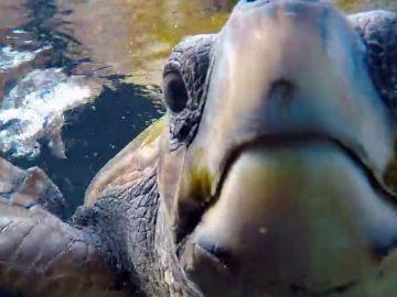 Marta Torné descubre los efectos de la contaminación en las tortugas marinas