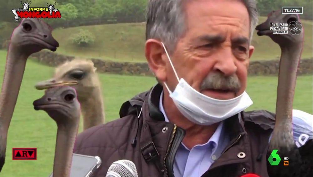Cuando los avestruces invadieron una rueda de prensa de Revilla