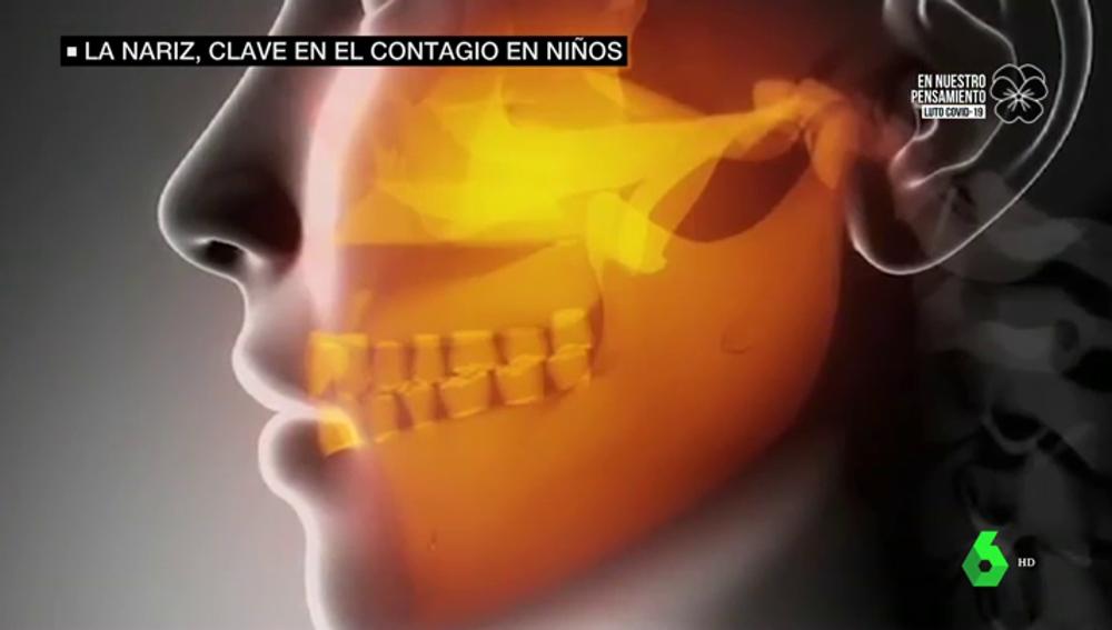 Un estudio halla la razón fisiológica por la que los niños son menos susceptibles al coronavirus