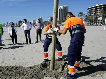 Instalación de señalización para mantener la distancia de seguridad en la playa de Alicante