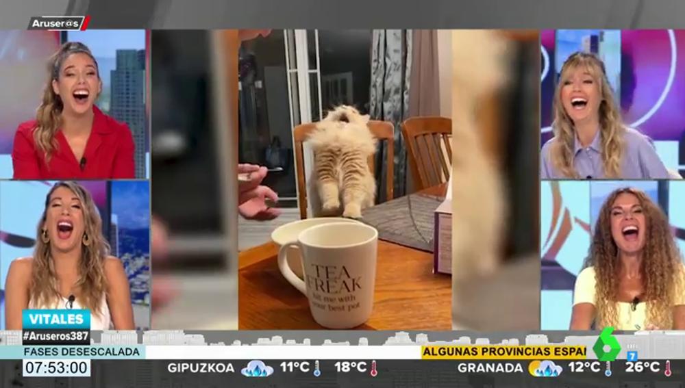La curiosa reacción de un gato tras probar helado por primera vez