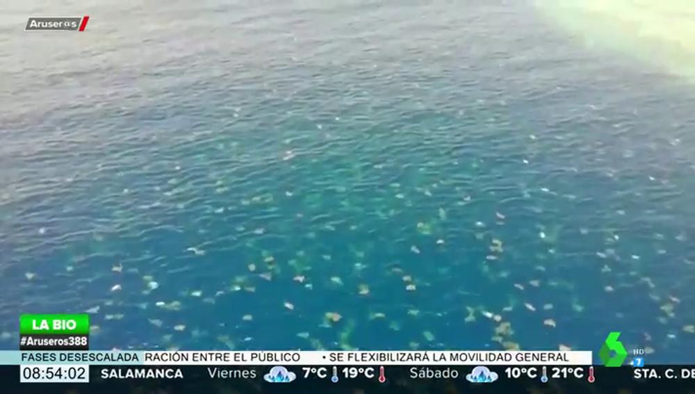 Las espectaculares imágenes a golpe de dron de miles de tortugas marinas en la Gran Barrera de Coral