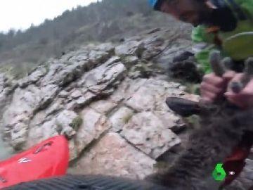Un kayakista rescata a un ciervo