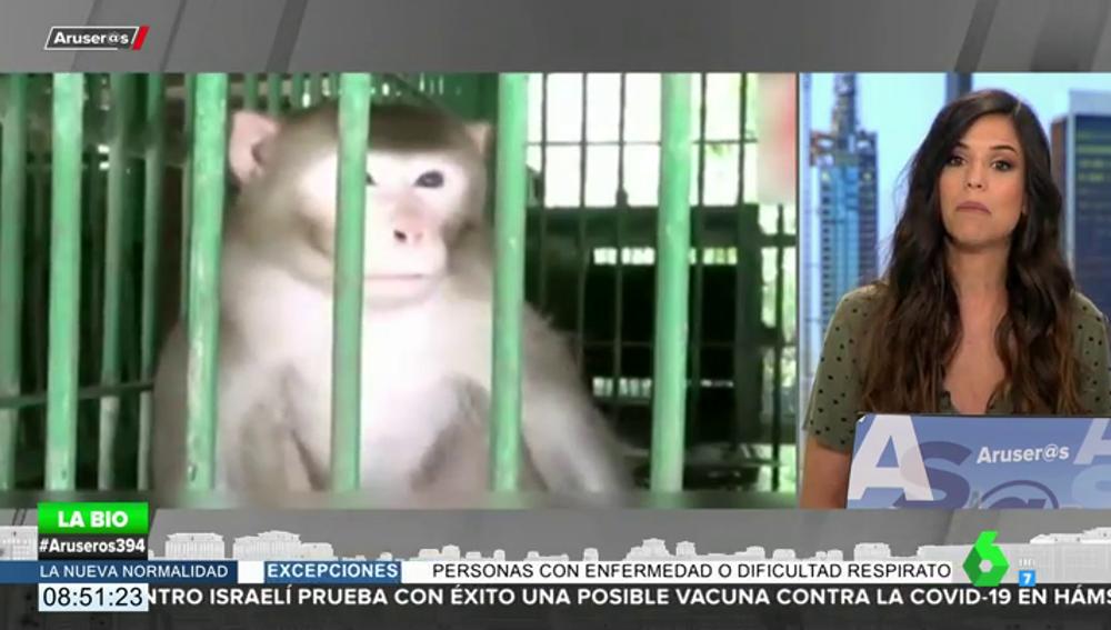 Un mono alcohólico pasará el resto de su vida en la jaula de un zoo por matar a una persona y morder a 250