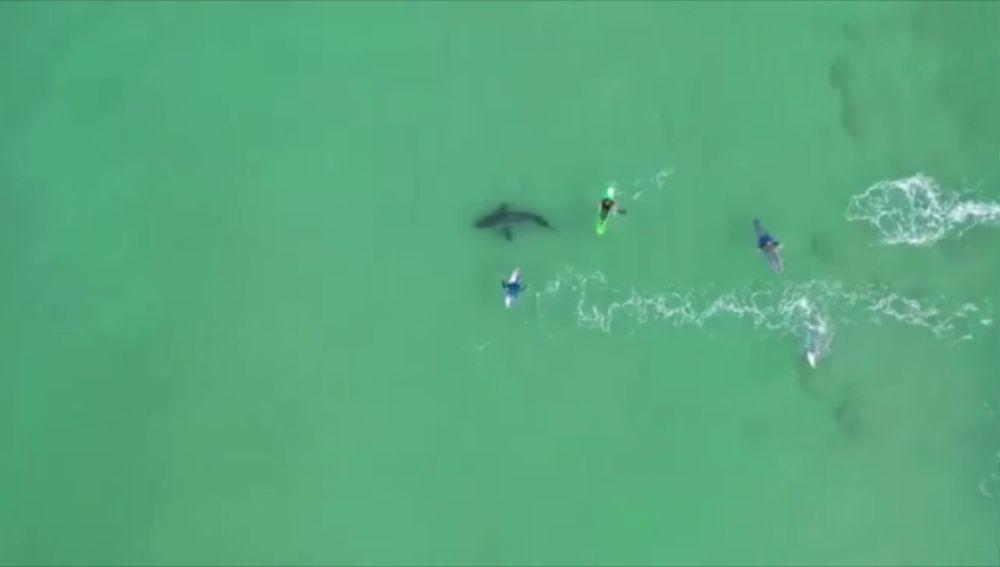 Un dron graba el momento en el que un tiburón blanco acecha a varios surfistas