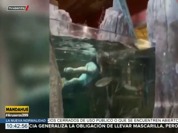 Buscan a un hombre que nadó con los peces de un acuario gigante de un centro comercial