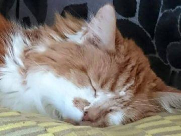 Imagen de Rubble, el gato que ha fallecido a los 31 años en Reino Unido